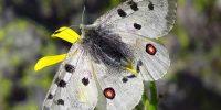 Fauna Lozoya
